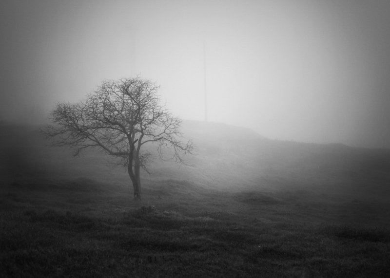Чб, Керчь, Дерево, туман photo preview
