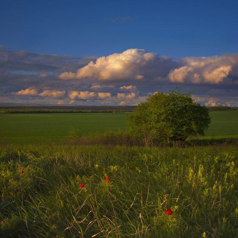вечер,май,облака,дерево,цветы,пейзаж Майский вечерphoto preview