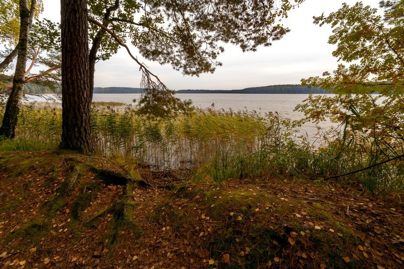 природа,беларусь,осень,пейзаж Пасмурно.photo preview