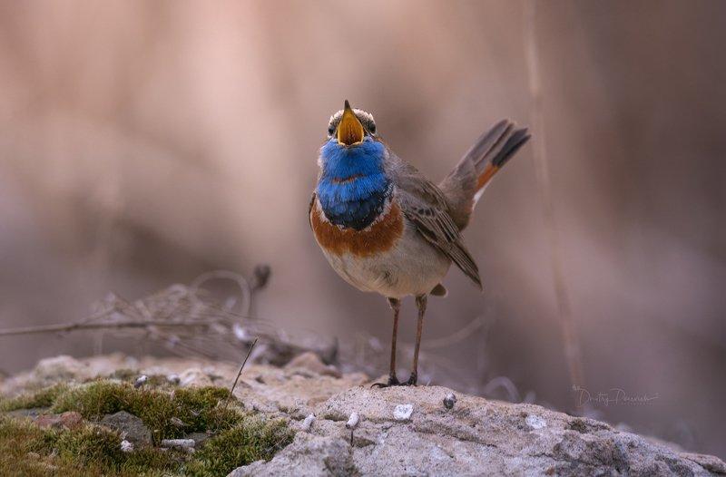 природа, лес, животные, птицы Пообееееда !!! фото превью