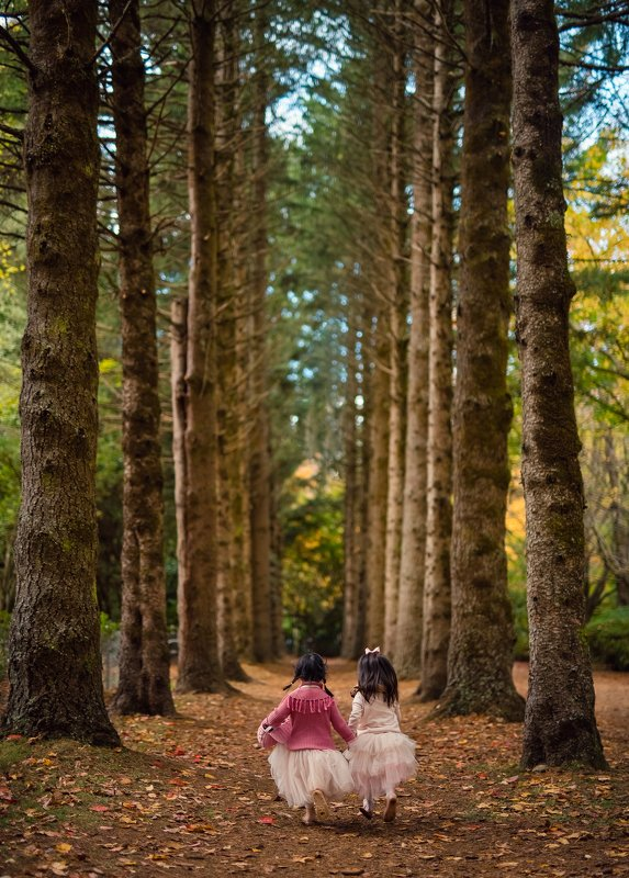 into the forest...photo preview