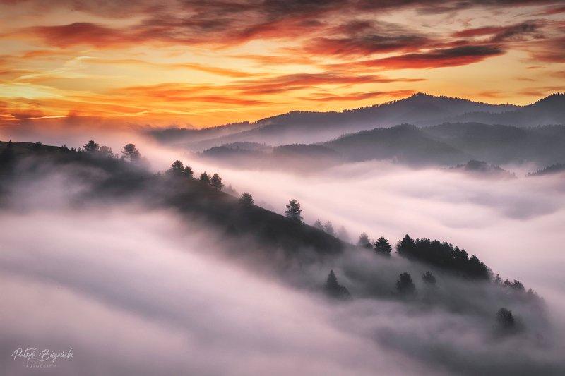 mountains, pieniny, slovakia, sunrise, sun, light, colors, fog, mist, forest, wood, trees, landscape, горы, пейзаж, закат Sea of fogphoto preview