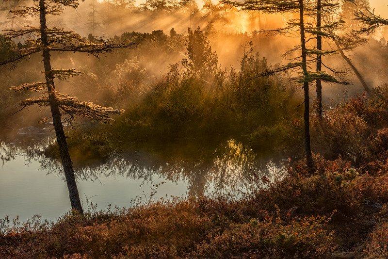 Фототуры с Владимиром Рябковым, озеро Джека Лондона. Туманы озера Джека Лондона.photo preview