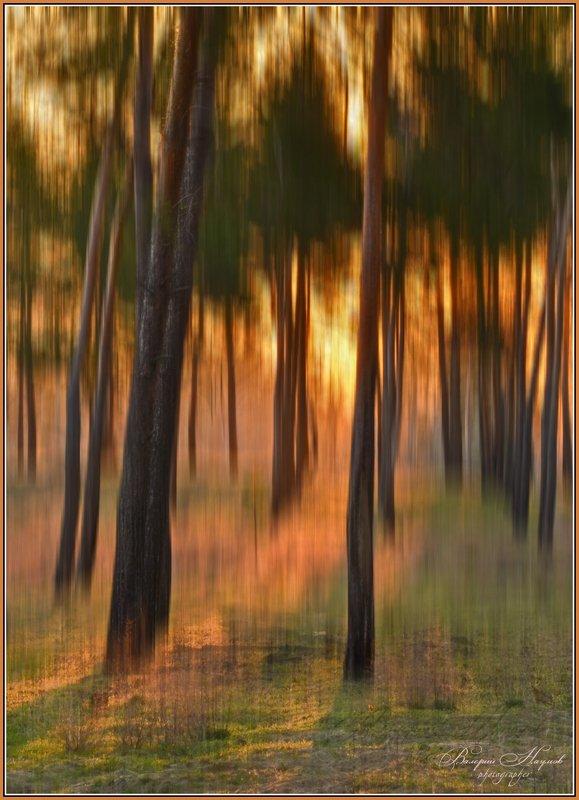 утро, свет, лес, весна Магия светаphoto preview
