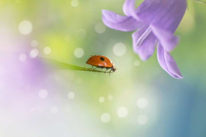 макро, природа, цветы, лето, весна, макро истории, красота, волшебство Под волшебным цветком...photo preview
