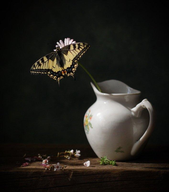 натюрморт, бабочка. цветок, кувшинчик с бабочкойphoto preview