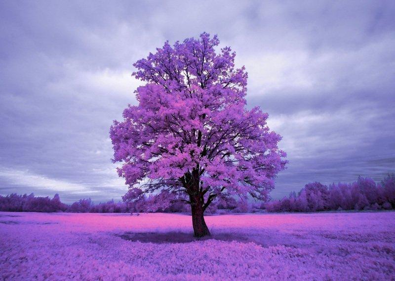 infrared,ик-фото,инфракрасное фото, инфракрасная фотография, пейзаж, осень, беларусь Из жизни полевых растений.photo preview