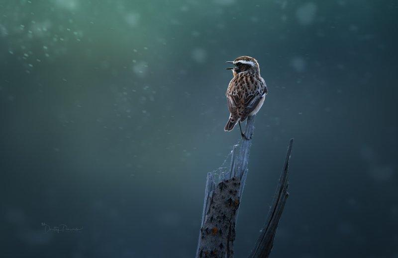 природа, лес, животные, птицы Тополь зацвел фото превью