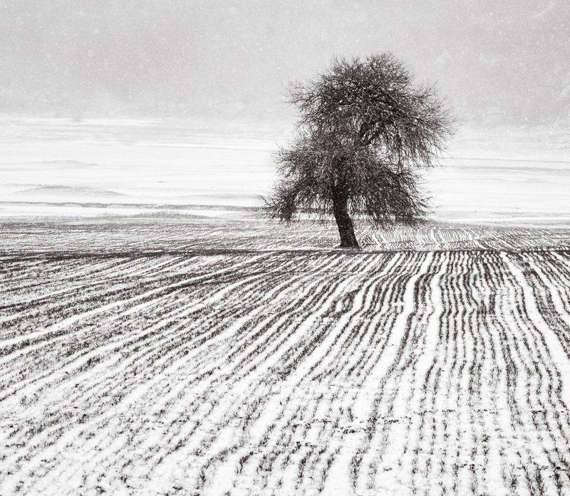 three , alone, snow Alonephoto preview