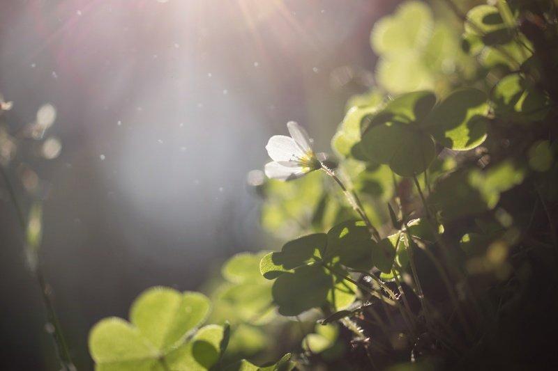 природа, трава, цветы, лес, закат, солнце, лучи, волшебство Весна в лесу...photo preview