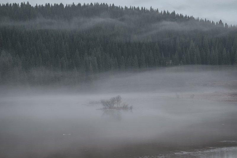 кусья, река, островок, утка, пермь, утро, рассвет, лес, туман, тайга, пермский край, пейзаж Туманный островокphoto preview