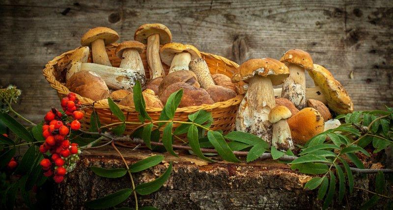 грибы, осень, рябина, корзина photo preview