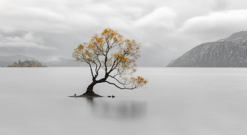 новая зеландия, new zeland Wanaka Treephoto preview