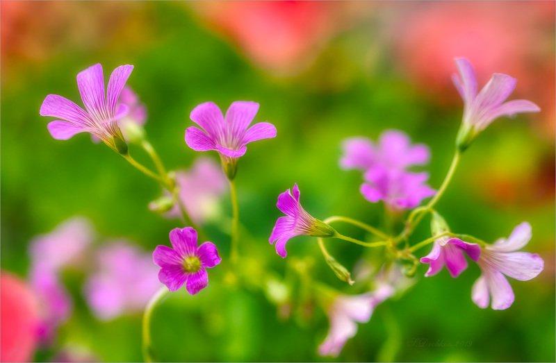 цветы, флора, весна, макро Навстречу летуphoto preview