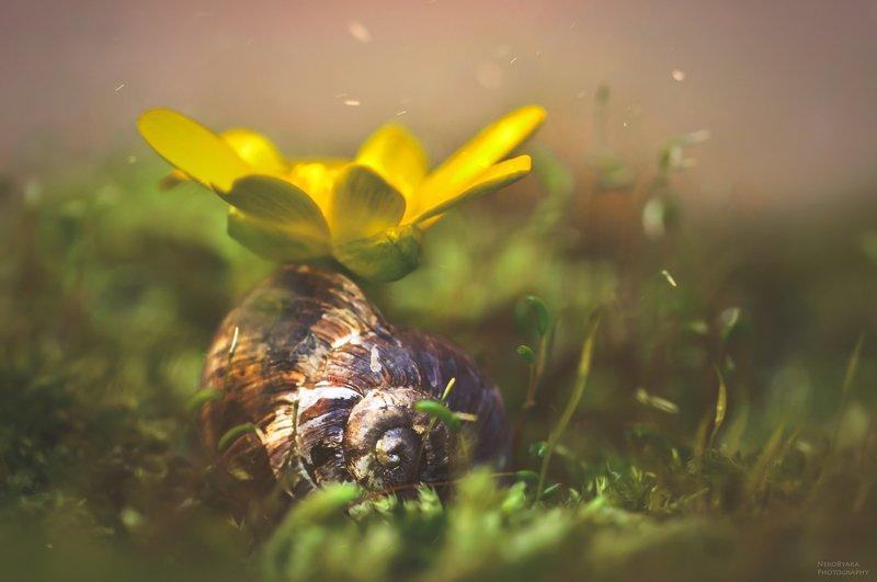 макро, природа, мох, улитка, ракушка, цветок, весна, macro, nature, moss, snail, shell, flower, spring, ***photo preview