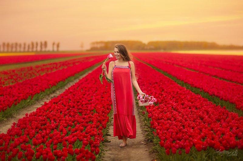 тюльпаны, голландия, нидерланды, tulip, Holland Тюльпановый райphoto preview