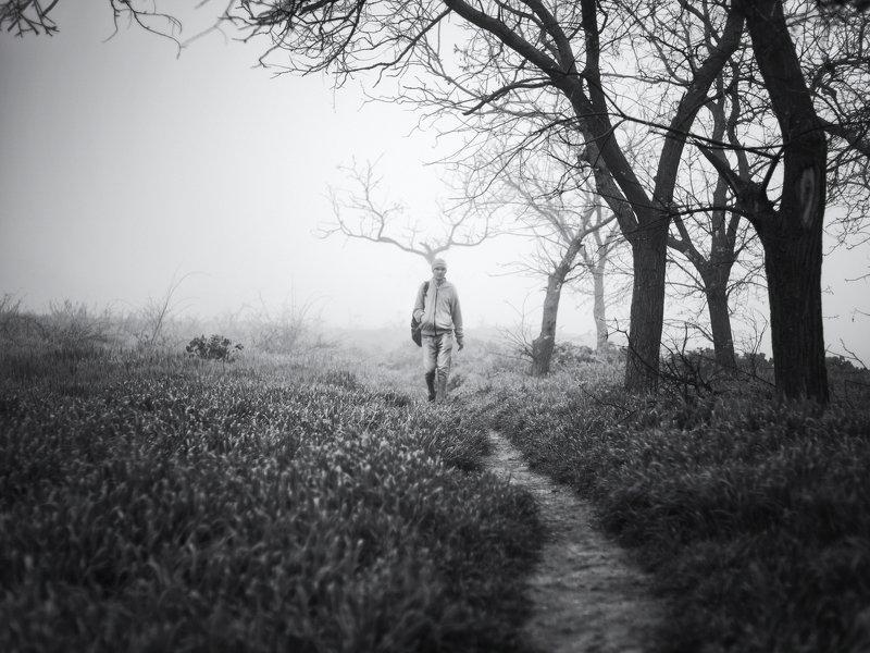 чб, Керчь, туман, рога, человек, дерево, дорога ***photo preview