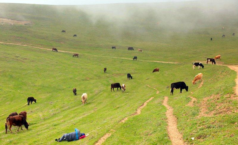 горы,весна,пейзаж,коровы,пастух, Горные мотивы.. фото превью