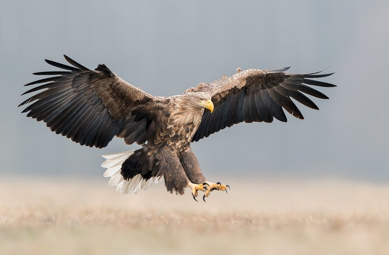 eagle, wildlife, animals, birds, nature, Eaglephoto preview