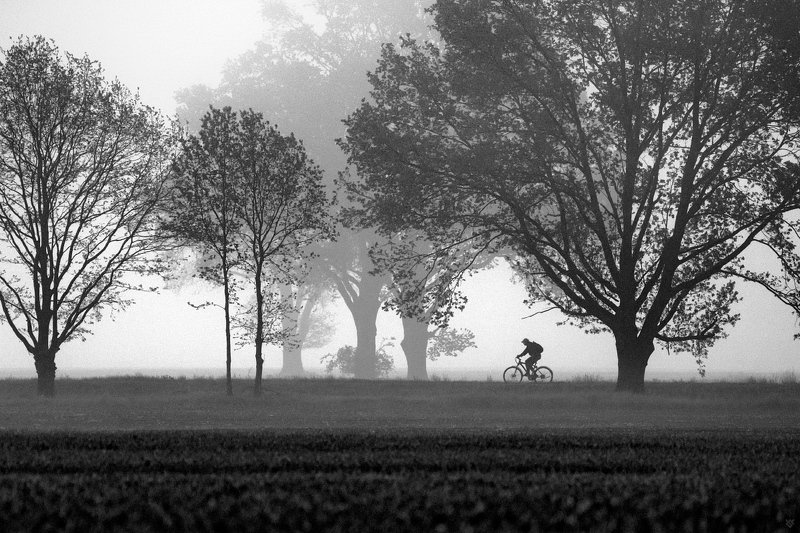 silhouette, bike, bw, black and white On the wayphoto preview