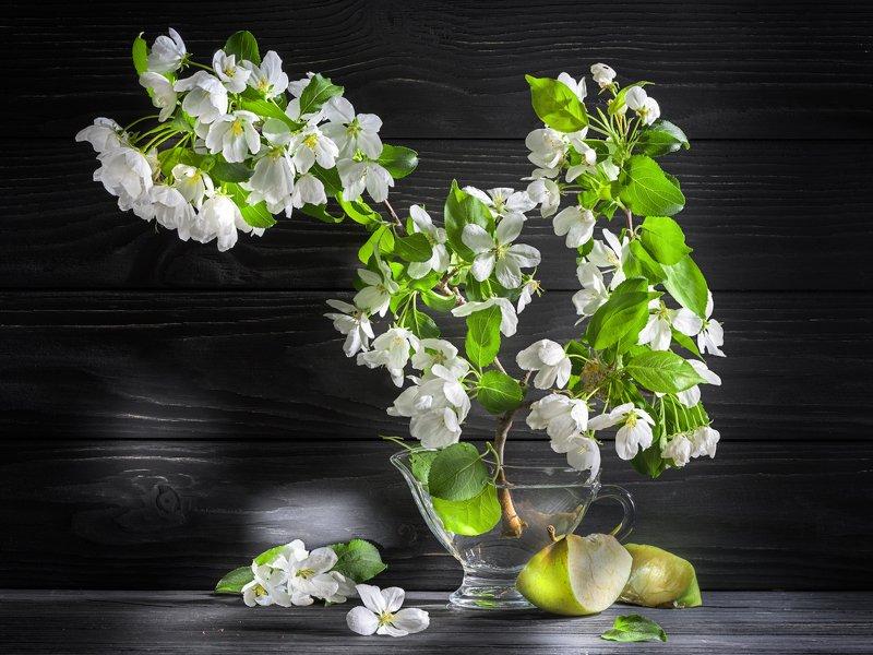 яблоня, цветы, яблоко, ветка, просвет, стекло, вода Цветёт яблонька...photo preview
