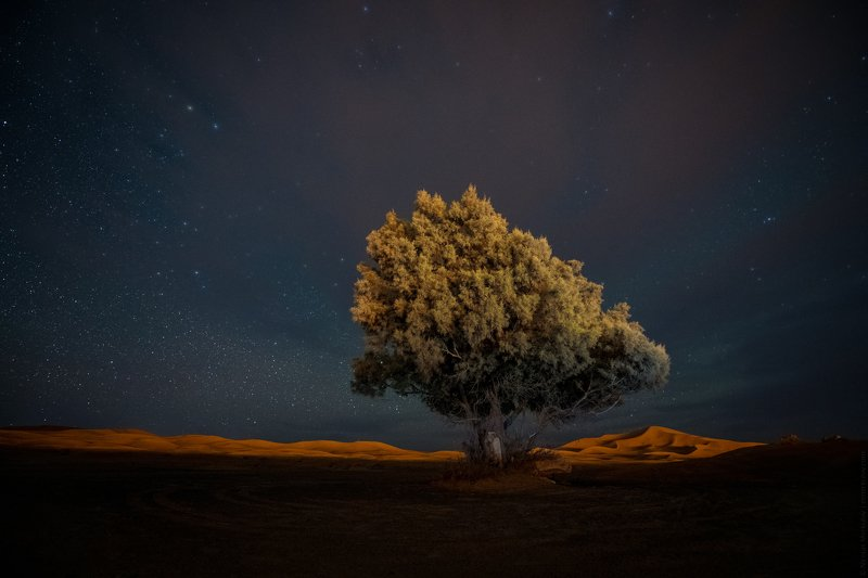 morocco, марокко, africa, африка, sahara, сахара, desert, пустыня, night, ночь, nightscape, landscape, пейзаж, stars, звезды, travel, тревел Дерево Сахары / Sahara Desert Treephoto preview