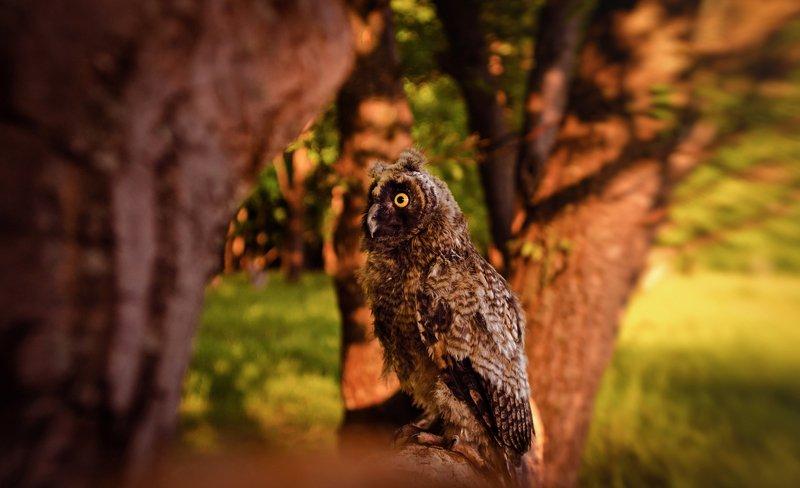 Nice Owlphoto preview