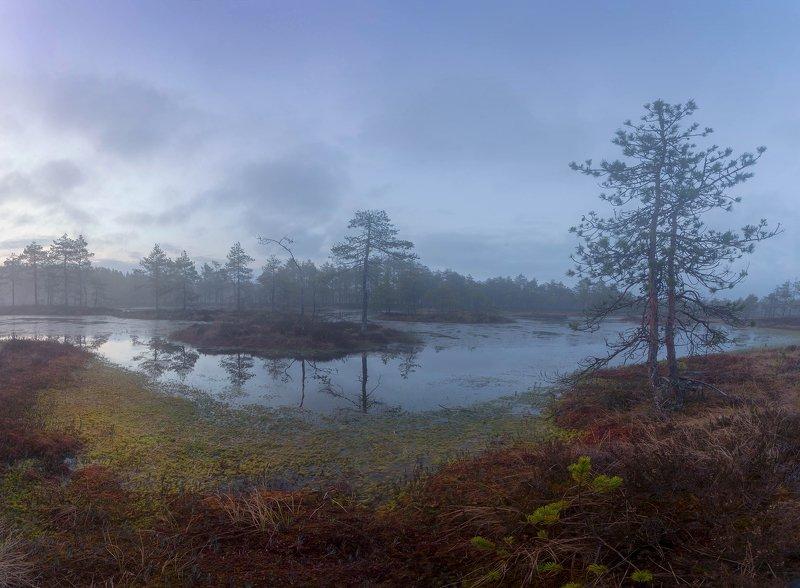 болото, кайф, рассвет ,север ,солнце, свет Перед восходом солнцаphoto preview