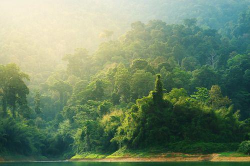 Тропический лес в лучах утреннего солнца.