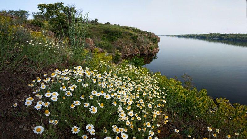 пейзаж,ромашки,берег,вечер,скалы,природа Ромашковый вечерphoto preview