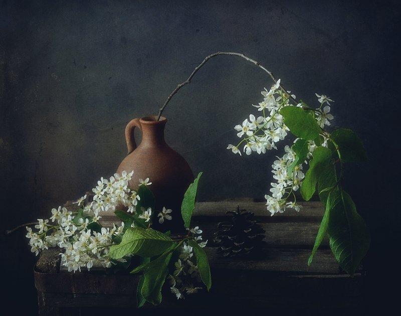 натюрморт,черемуха,цветы,весна с лесной черемухой...photo preview