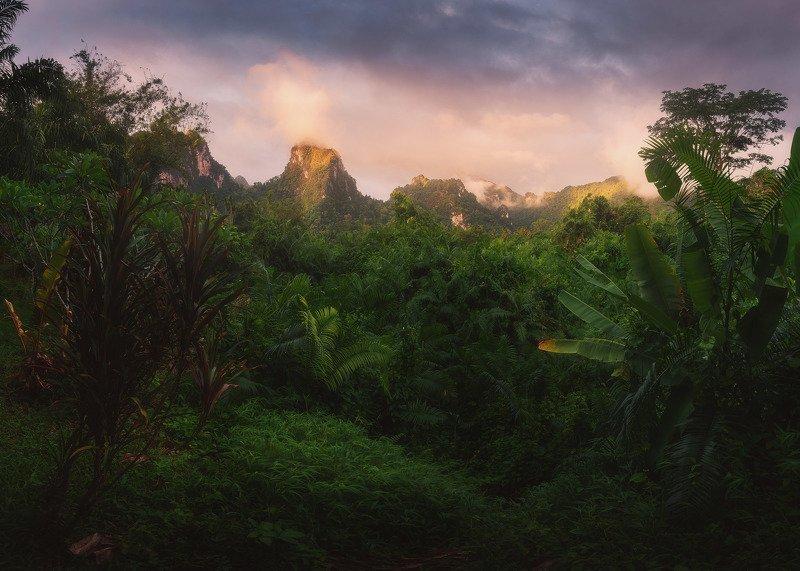 Изумрудный лес на рассветеphoto preview