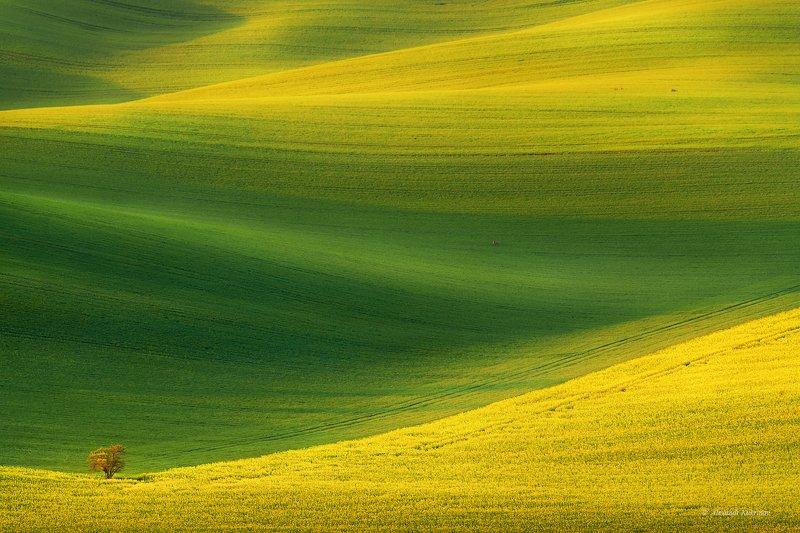 моравия, рассвет, пейзаж Shades of spring... фото превью