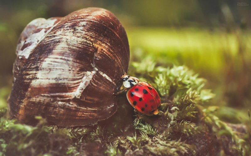 макро, природа, насекомые, божья коровка, мох, весна, macro, nature, insects, ladybug, moss, spring, Приключения одной коровкиphoto preview