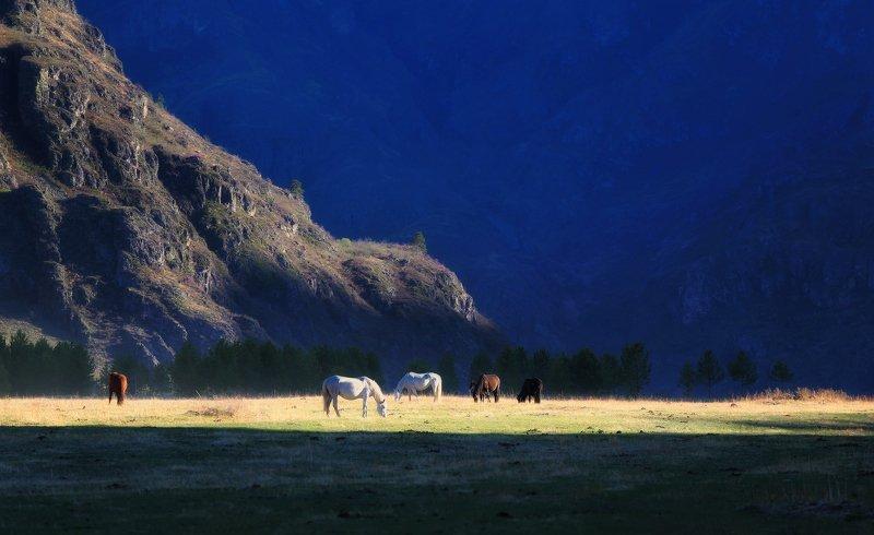 алтай, горный алтай, лошади, весна, горы На исходе майского дняphoto preview