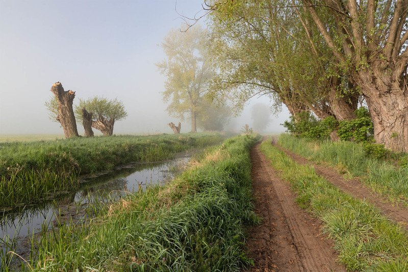 morning,fog,willow,road, morningphoto preview