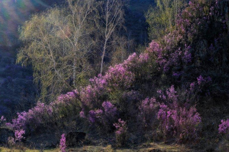 Весенний этюдphoto preview