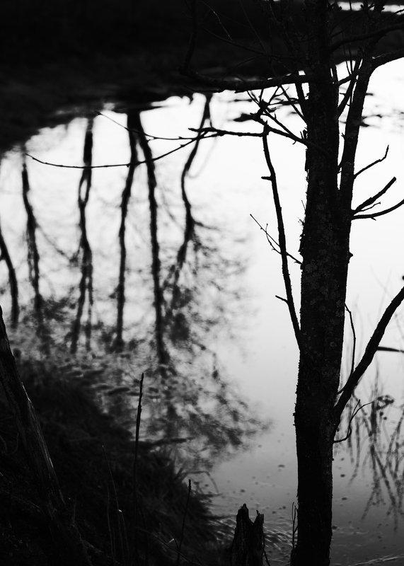 дерево, отражения, пруд, чёрно-белое Зеркало. (Реверансы Тарковскому.) photo preview