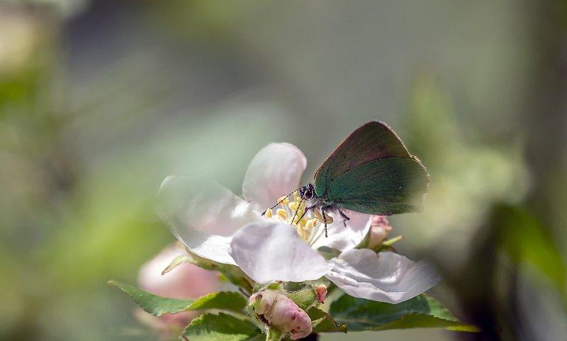 nature, природа, весна, цветы, бабочки, насекомые бабочкиphoto preview