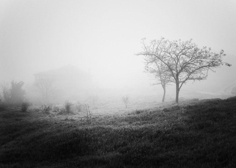 чб, Керчь, дерево, туман ***photo preview