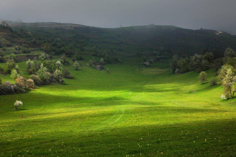 горы,весна,поляна,солнце,свет.дагестан,трава. Солнечная поляна.. фото превью