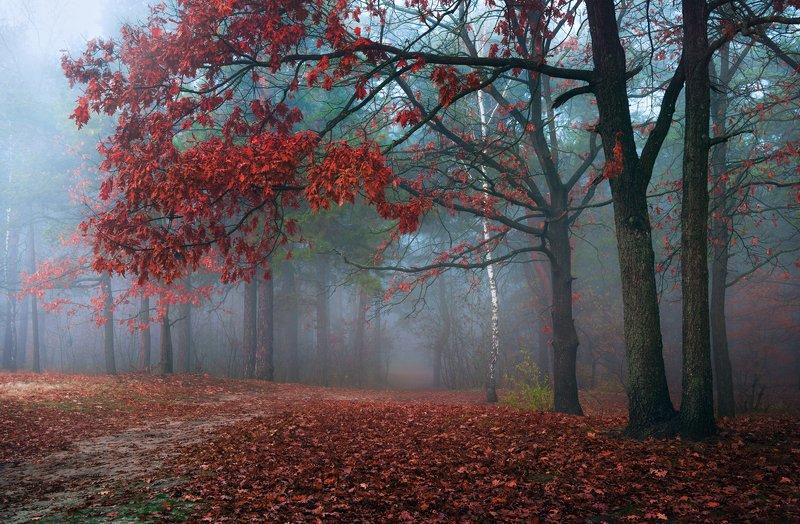 лес, осень, ноябрь, туман, белый Магия туманаphoto preview