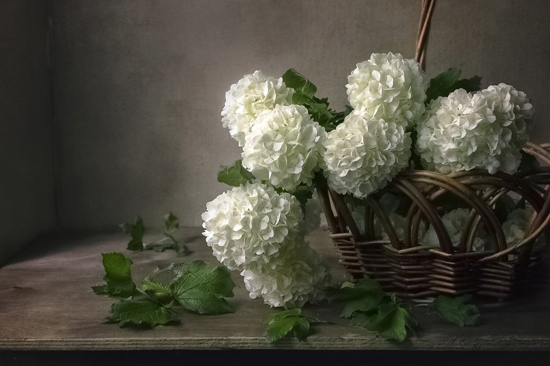 натюрморт, бульдонеж, корзина, белые цветы, весна Весной.photo preview
