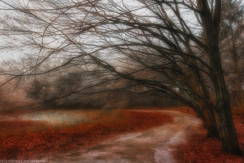 landscape, travel, nature, tree, forest, art, mood, road, netherlands Dancing Redphoto preview