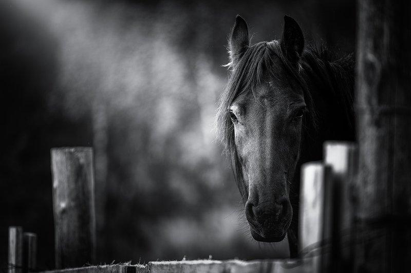 horse,portrait,animal longingphoto preview