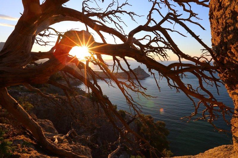 крым, новый свет, можжевельник, капчик, рассвет, восход, дерево, лучи through the branchesphoto preview