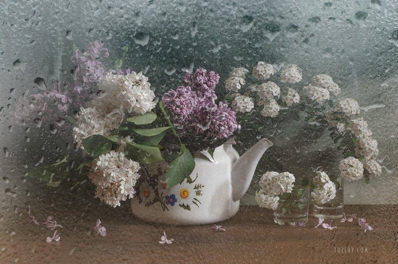 спирея, невеста, листки спиреи, цветок спиреи, сирень, цветки сирени, невеста в чайнике, весна в стакане, весна в чайнике Невеста с сиренью в чайникеphoto preview