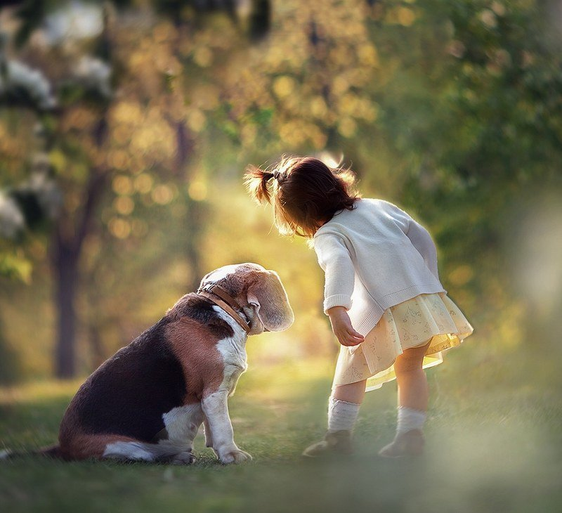 собака девочка дети животные вместе друзья Парочкаphoto preview