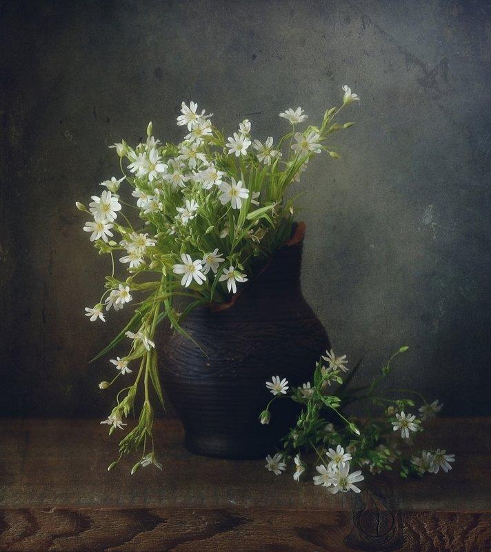 натюрморт,звездчатка,цветы,весна звездчатка ))photo preview