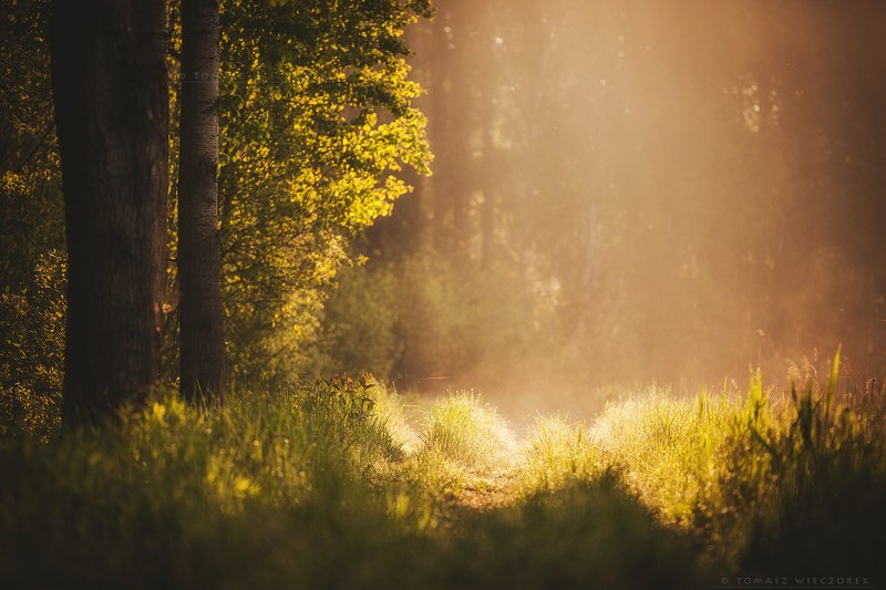 forest, poland, polish, landscape, sunrise, sunset, mood, beautiful, amazing, awesome, adventure, explore, travel, light, morning The Lightphoto preview